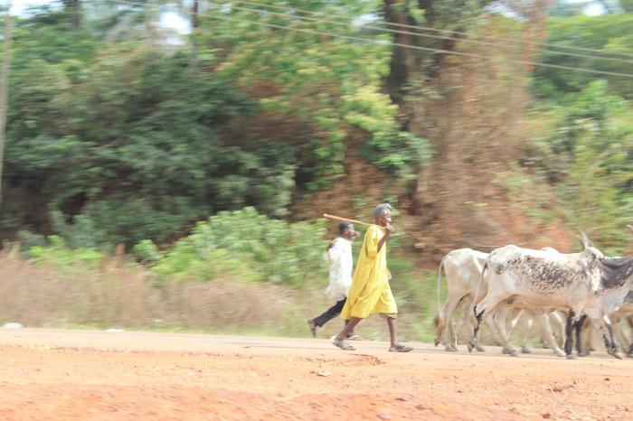 Fulani Cattle Herdsmen