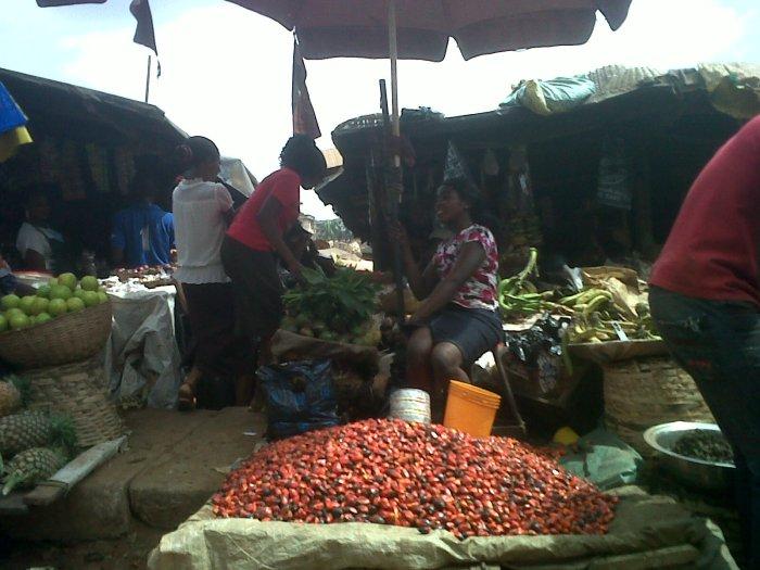 Palm Kernnel | Nkpo Market