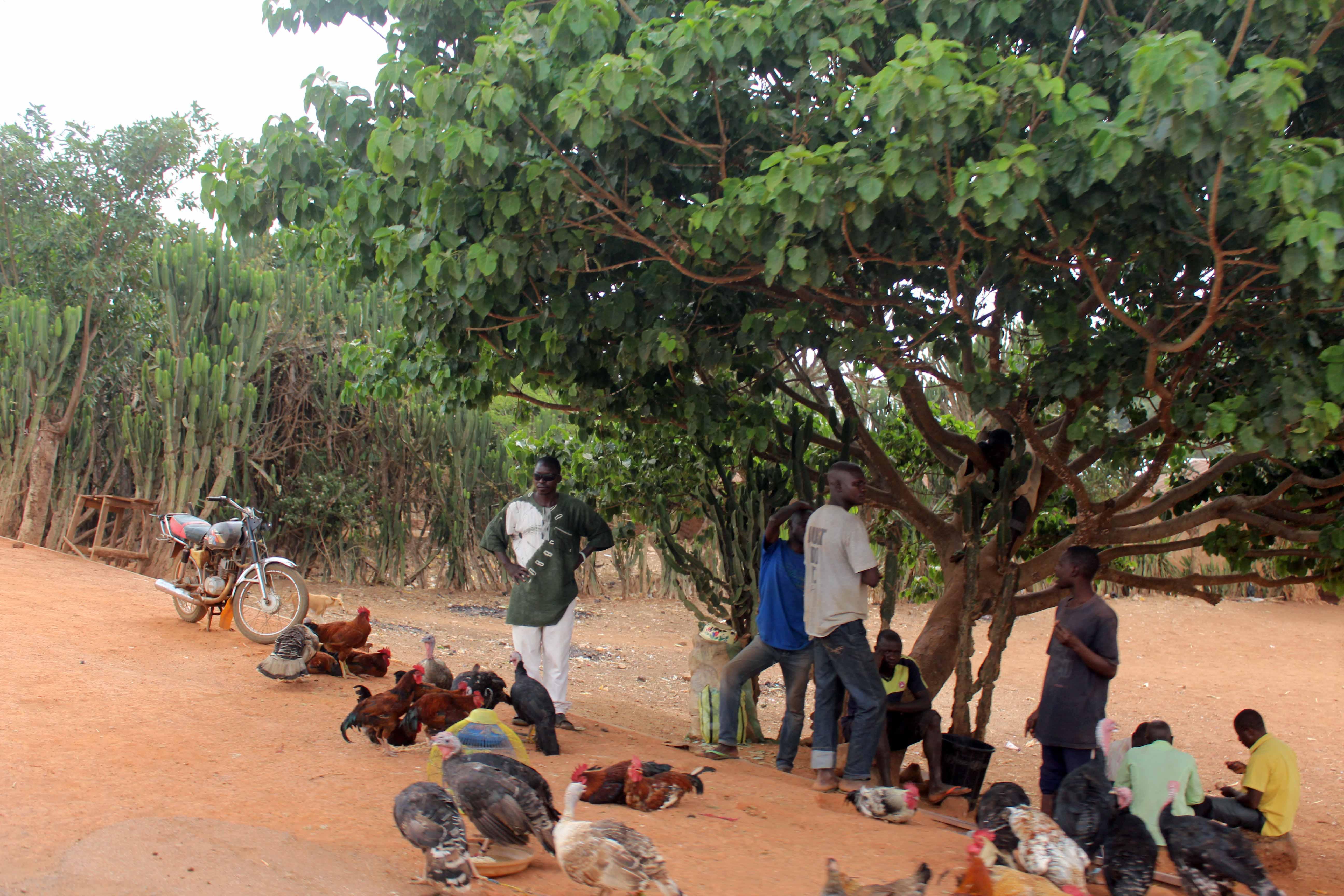 Roadside Poultry Market Kaduna State Nigeria