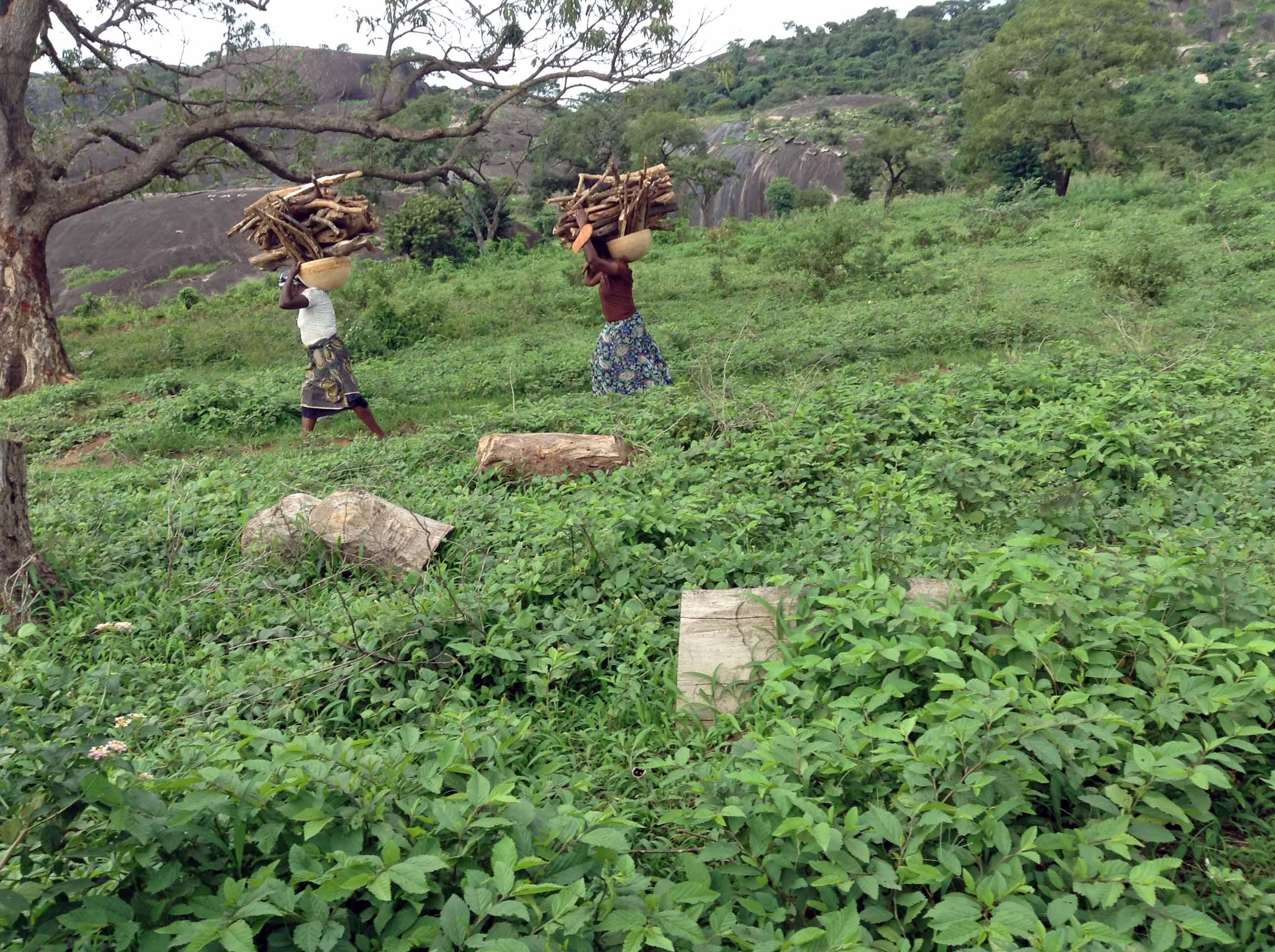 Gbagyi Women fetching firewood in Ushafa Nigeria