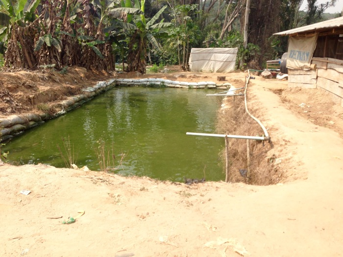 Fish Farm Community in Ijebu Imushin