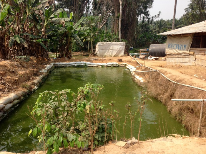 Sustainable Fish Farming Community in Ijebu Imushin Ogun State Nigeria