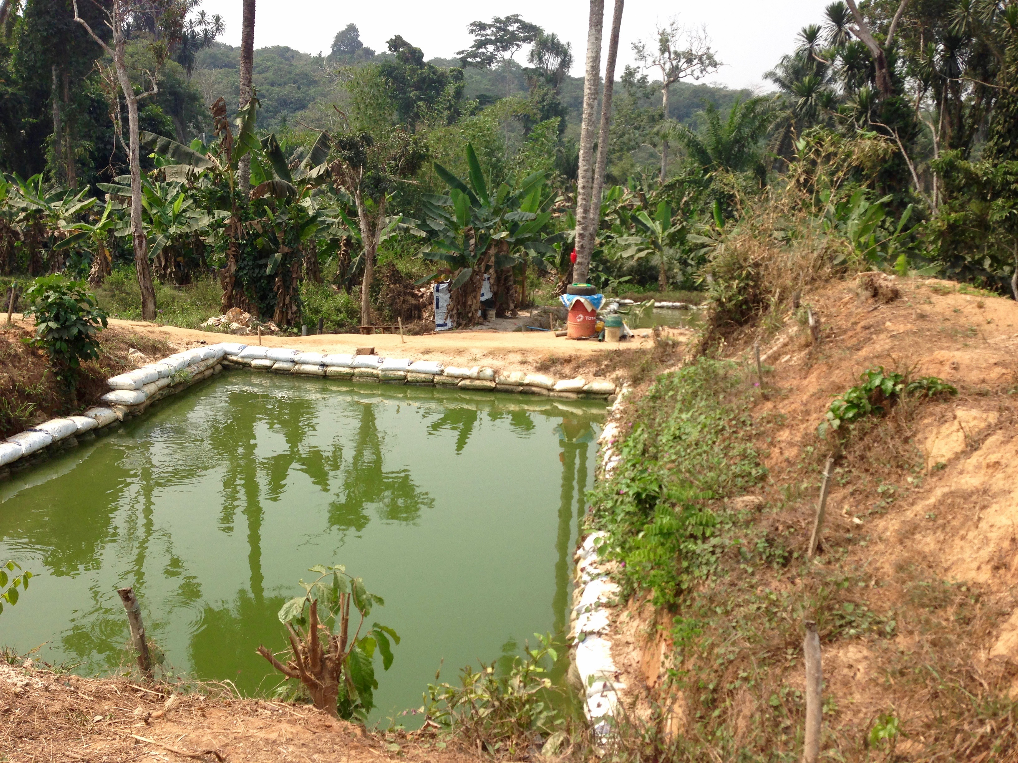 Sustainable Fish Farming Community in Alakuko, Ogun State, Nigeria. #JujuFilms