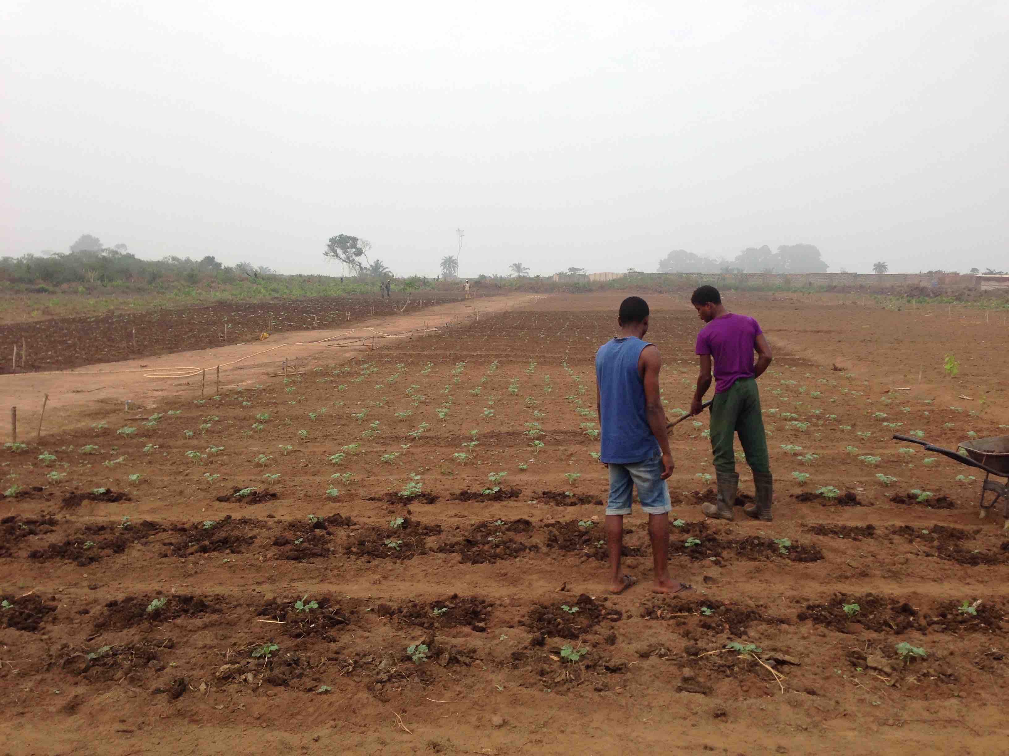 Otedola Integrated Farms in Odoragunshin, Epe, Lagos State, Nigeria. #JujuFilms