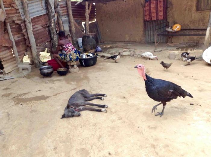 Langa Langa  Village, Nasarawa State, Nigeria. #JujuFilms