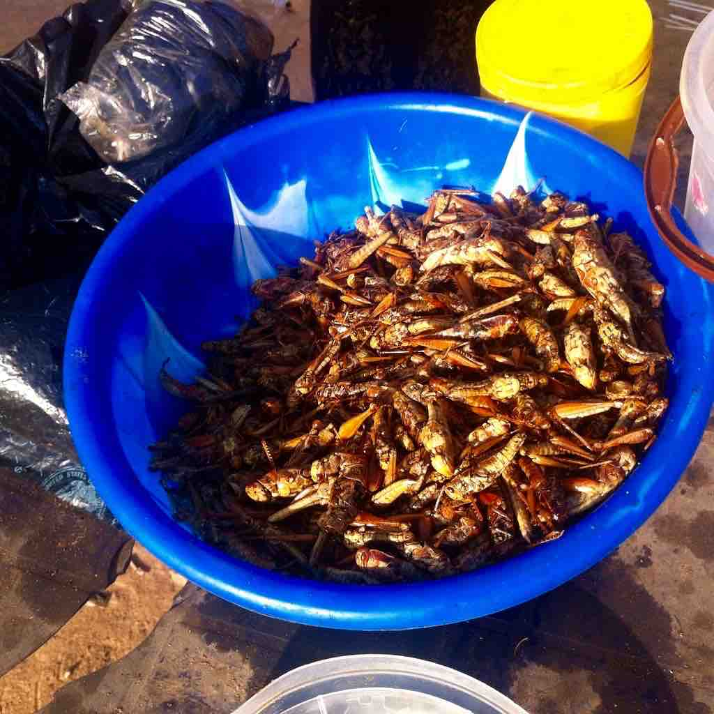 Eat more insects, Open fire grilled grasshoppers, Ushafa Bridge, Abuja, Nigeria, #JujuFilms